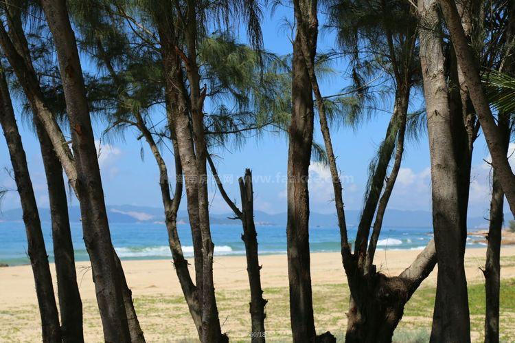 钻石海岸实景图