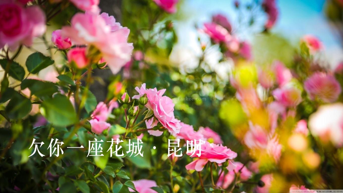 滇池港湾-花式湖居生活